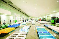 [A][P]①市場での仕分け・配送 ②冷蔵庫での倉庫補助