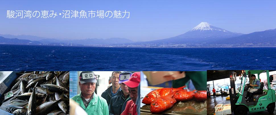 駿河湾の恵み・沼津魚市場の魅力